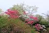 Beautiful flowering trees at Old Westbury Gardens.