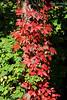 Fall foliage at Old Westbury Gardens.