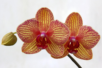 Orchid at Planting Fields Arboretum