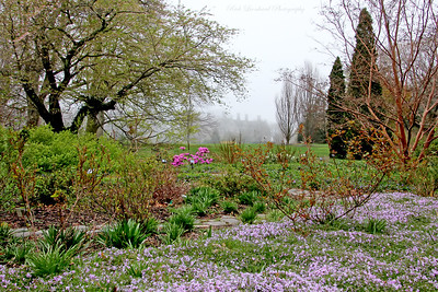 Pretty flowers in front of Coe Hall at Planting Fields Arboretum on a foggy day.