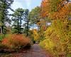 Autumn foliage at Planting Fields Arboretum.