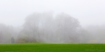 A foggy day at Planting Fields Arboretum.