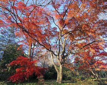 Planting Fields Arboretum fall foliage