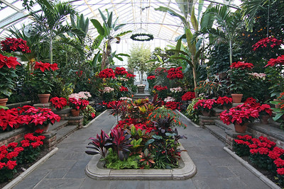 Planting Fields Arboretum greenhouse in holiday cheer