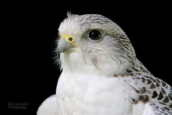 Beautiful bird at Old Westbury Gardens, NY.