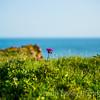 Thistle - Port Eiynon