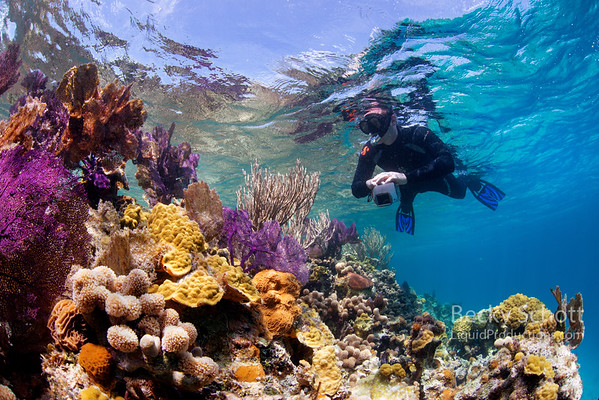 Snorkeling on healthy coral reef surrounding the Blue Hole