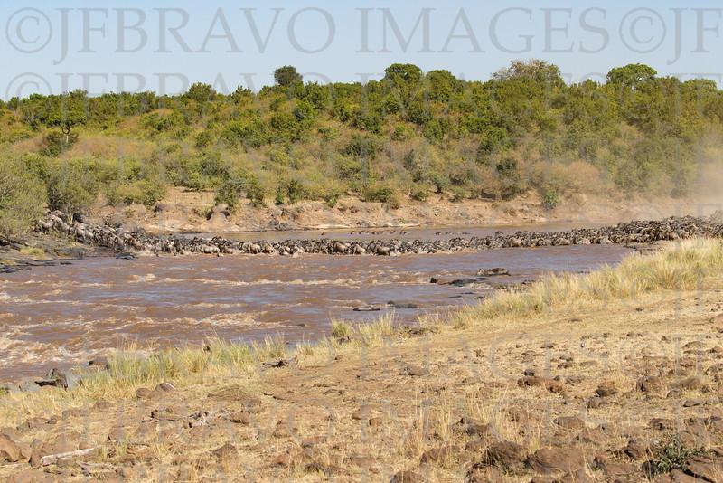 The Mara River Crossing