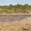 The Mara River Crossing