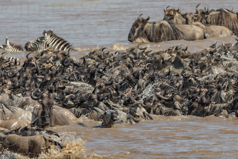 Chaos in the River