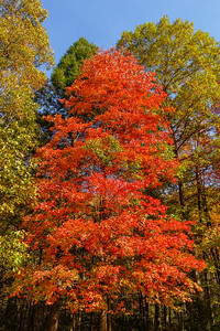 Autumn foliage at Anna Ruby Falls, Georgia