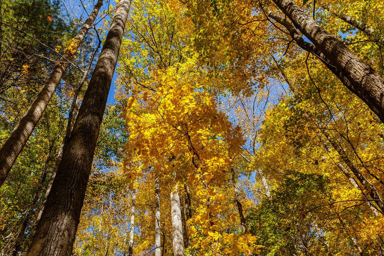 Autumn foliage at Anna Ruby Falls, Georgia