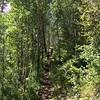 Eaglesmere Trail