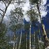 Eaglesmere Trail Aspen Forests