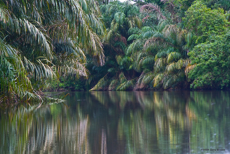 Colorful reflections in Tortuguero National Park