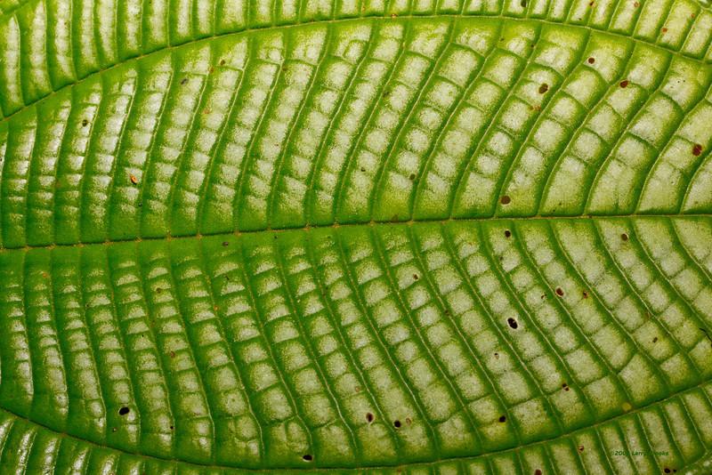 Rainforest texture!
