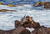 The Galapagos fur seal generallly prefers rocky locales.
