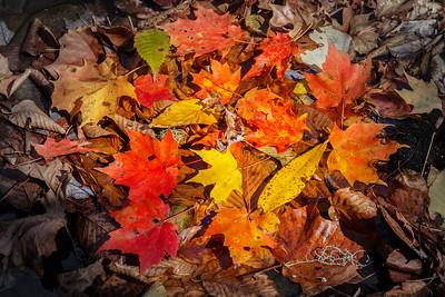 Autumn provides a magnificent show color