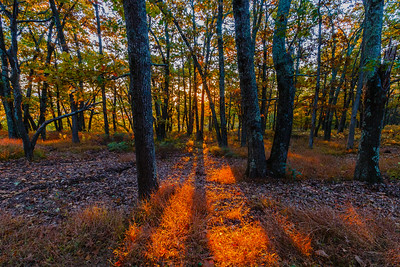 The sun rises through the trees at Big Meadows Campground