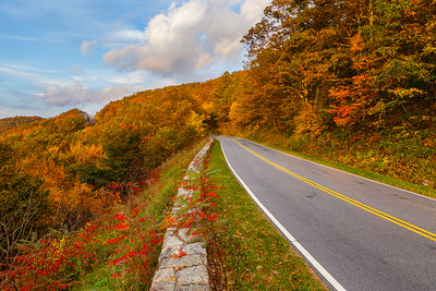 Skyline Drive is adorned with Virginia Creeper