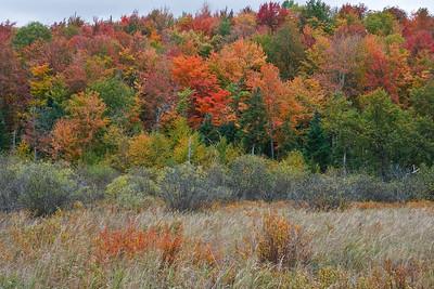 A Leaf Peeper's paradise!