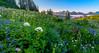Paradise Wildflowers