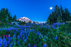 Bloom Under the Moon - Spray Park