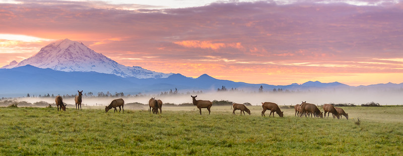 Majestic Morning - Printz Basin Herd
