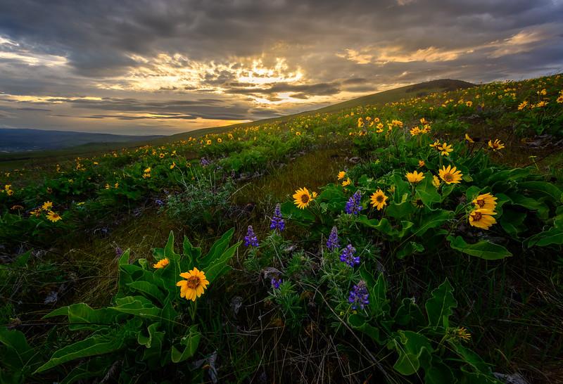 Columbia Hills Gold
