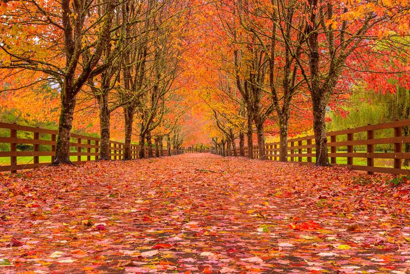 Rockwood Fall