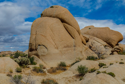 A very unhappy rock at Joshua Tree National Park