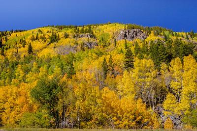Aspen trees, Sylvan Lake State Park