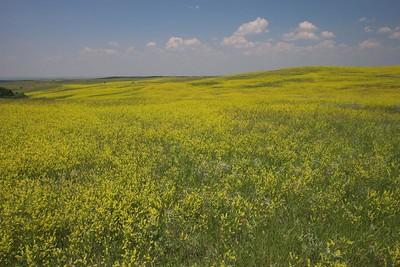 Prairie overlook at Theodore Roosevelt National Park (North Unit)