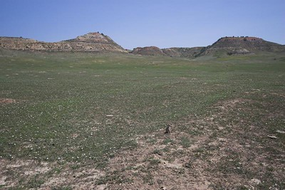 Prairie Dog town at Theodore Roosevelt National Park (South Unit)