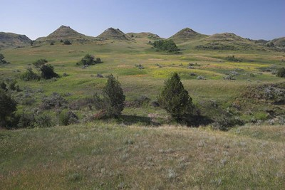Grassy knolls at Theodore Roosevelt National Park (South Unit)