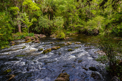 Class 2 rapids at Hillsborough River SP