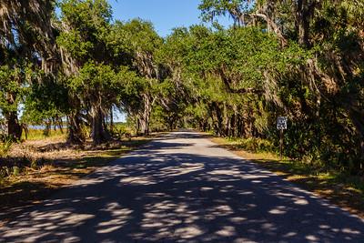 Oak tree adorned with Spanish Moss create a boulevard entrance to Myakka River State Park