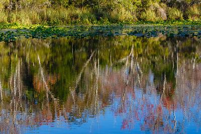 Alexander Springs, Ocala National Forest