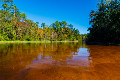 Autumn - Florida-style! Blackwater River State Park