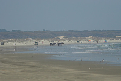 Wild horses on the beach at Cumberland Island NS