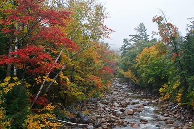 Autumn colors stand out on a rainy day in Crawford Notch State Park (photo by Kerry Brooks)