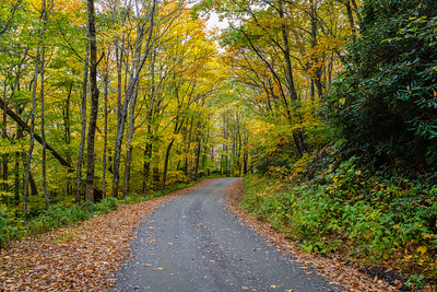 Forest Road 472 in the Pisgah National Forest
