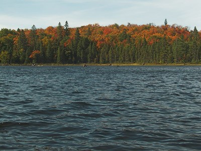 Fall colors, Algonquin Provincial Park