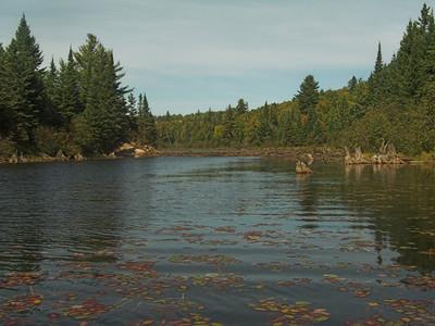 Beaver dam, Algonquin Provincial Park