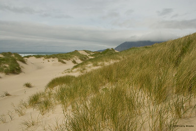 Sand dunes at Nehalem Bay SP