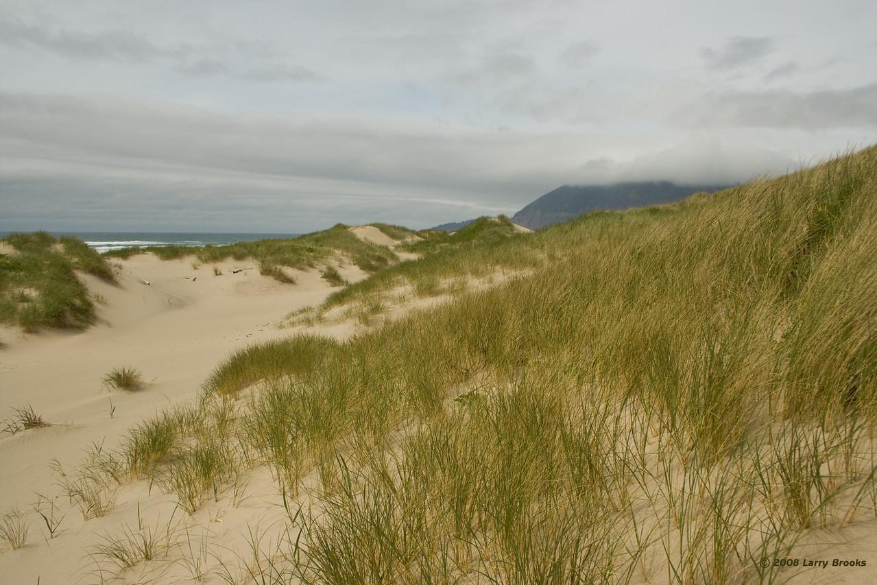 Sand dunes at Nehalem Bay SP