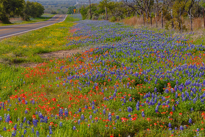 Texas Bluebonnets and Indian Paintbrush adorn the roadsides in Hill Country