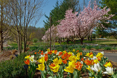 Meadowlark Botanical Gardens (Vienna, VA)