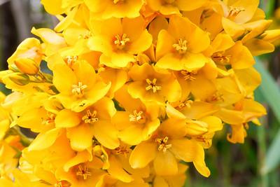 Wildflowers in Marymoor Park
