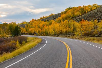 Autumn colors - Grand Teton National Park
